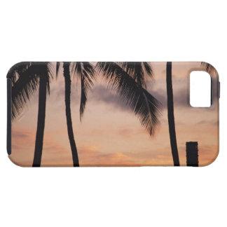 Signalera och palmträdet iPhone 5 skal