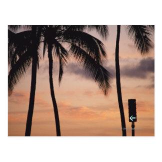 Signalera och palmträdet vykort