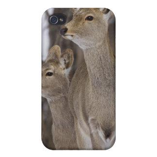Sika hjortDoe och barn, Hokkaido, Japan iPhone 4 Skydd