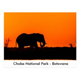 Silhouette av en elefanttjur på solnedgången vykort