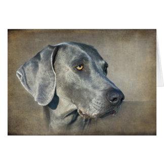 SilverblåttWeimaraner porträtt Hälsningskort