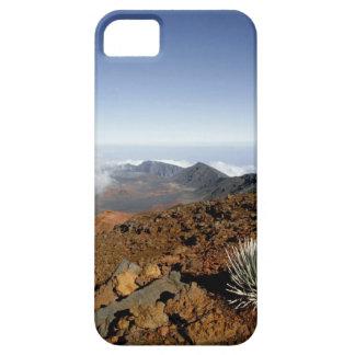 Silversword på Haleakala kraterkant från nära iPhone 5 Case-Mate Fodral