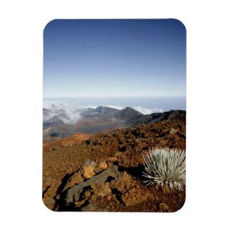 Silversword på Haleakala kraterkant från nära Magnet