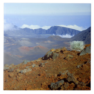 Silversword på Haleakala kraterkant från near 2 Kakelplatta