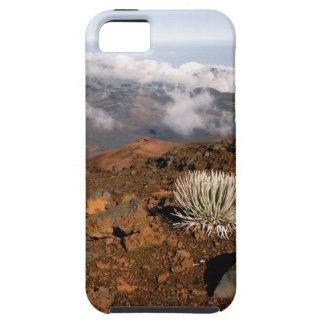 Silversword på Haleakala kraterkant från near 3 iPhone 5 Hud