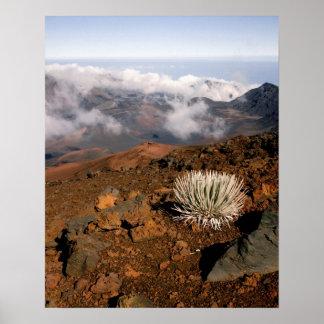 Silversword på Haleakala kraterkant från near 3 Poster
