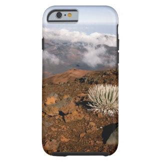 Silversword på Haleakala kraterkant från near 3 Tough iPhone 6 Skal