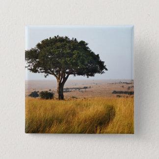 Singelacaciaträd på gräs- slättar, Masai Mara, Standard Kanpp Fyrkantig 5.1 Cm