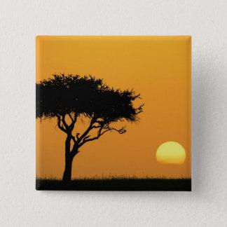 SingelAcaciaträd silhouetted på soluppgången, Masa Standard Kanpp Fyrkantig 5.1 Cm