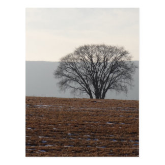 Singelträd i fält vykort