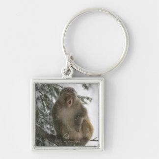 Sitta för rhesusapaMacaqueapa (Macacamulatta) Fyrkantig Silverfärgad Nyckelring