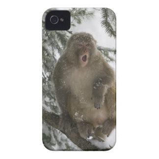 Sitta för rhesusapaMacaqueapa (Macacamulatta) iPhone 4 Case