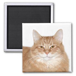 Självbelåten le katt magnet