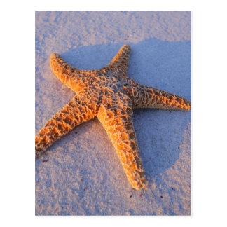 Sjöstjärna på vitsanden vykort