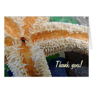 Sjöstjärnan på strandexponeringsglas tackar dig hälsningskort