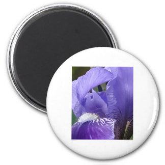 Skäggig Iris Magnet