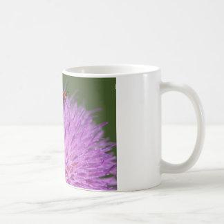Skalbaggen på lilamjölk Thisle fotograferar Kaffemugg