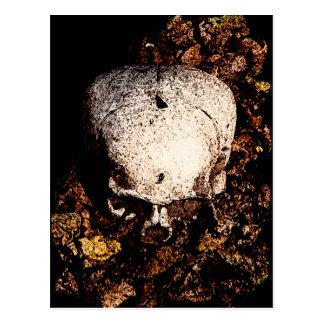 Skalle i löven vykort