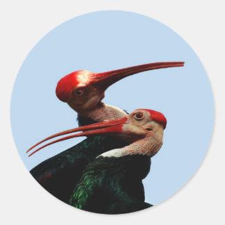 Skallig Ibis fågel Sydafrika Runt Klistermärke