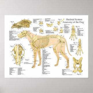 "Skeletal anatomiaffisch 18"" för hund X 24"", Poster"
