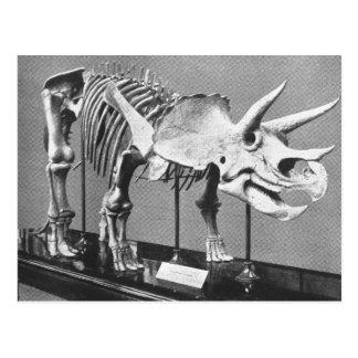 Skelett- antikt foto för Triceratops Vykort