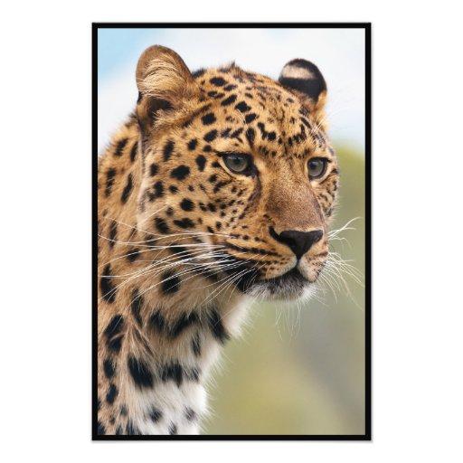Skjutit Leopardhuvud Fotografiskt Tryck