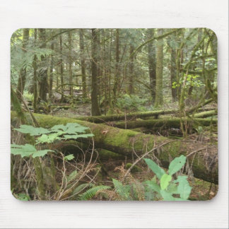Skog Musmatta