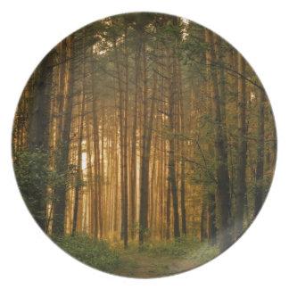 Skog Tallrik