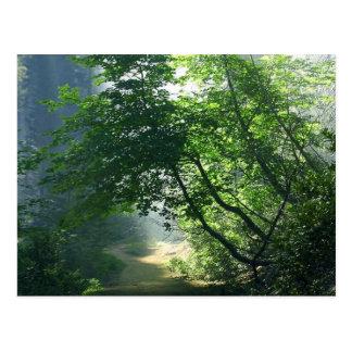 Skogen för skogar för Smokey vägslingor Vykort