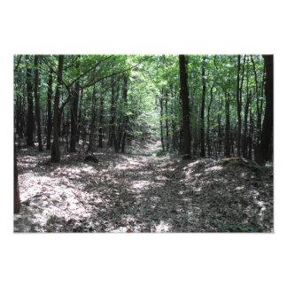 Skogen går fototryck