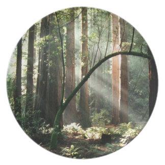 Skogen strålar pläterar tallrikar