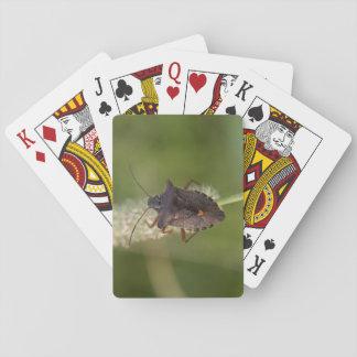 Skogkryp Spel Kort