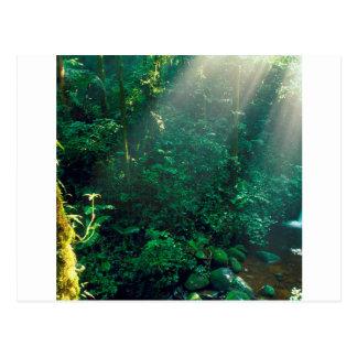 SkogMonteverde moln Costa Rica Vykort