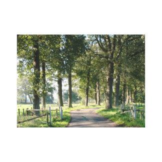 Skogväg med träd i solljuskanvastryck canvastryck