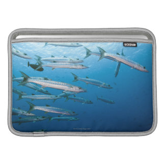 Skola av blackfinbarracudaen (Sphyraenaqenie) MacBook Air Sleeve