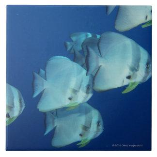 Skola av fisk 5 kakelplatta