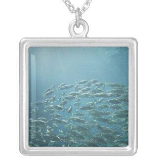 Skola av fisken, Nassau, Bahamas Silverpläterat Halsband