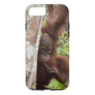 Skolar den föräldralösa Jeffrey för orangutanen