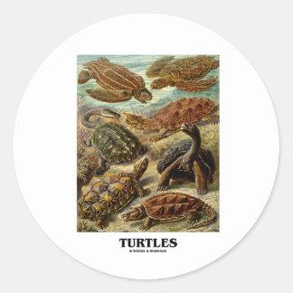 Sköldpadda (7 olika sköldpaddor Artforms av natur) Rund Klistermärke