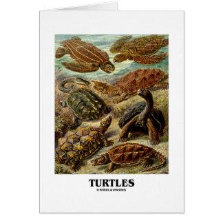 Sköldpadda 7 olika sköldpaddor Artforms av natur Hälsnings Kort