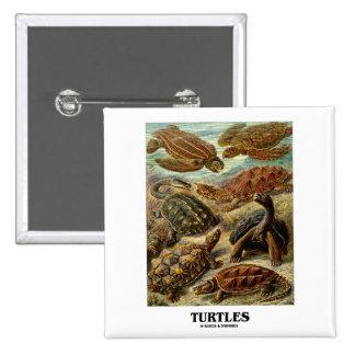 Sköldpadda (7 olika sköldpaddor Artforms av natur) Knapp Med Nål