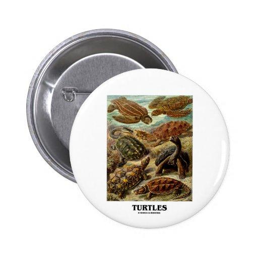 Sköldpadda (7 olika sköldpaddor Artforms av natur) Knappar Med Nål