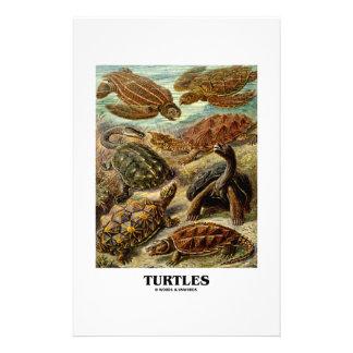 Sköldpadda (7 olika sköldpaddor Artforms av natur) Brevpapper Design