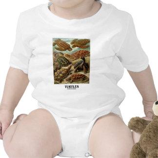 Sköldpadda (7 olika sköldpaddor Artforms av natur) Body För Baby
