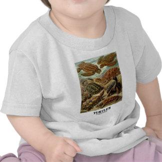 Sköldpadda (7 olika sköldpaddor Artforms av natur) T-shirt