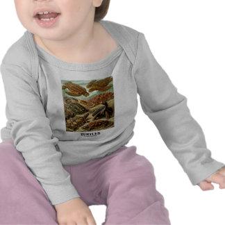 Sköldpadda (7 olika sköldpaddor Artforms av natur) Tee Shirt