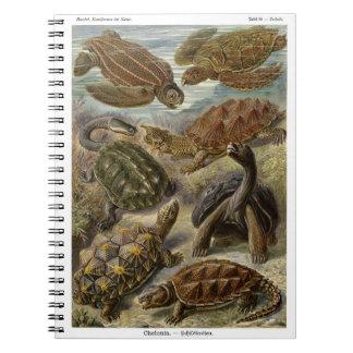 Sköldpadda och sköldpadda av Ernst Haeckel Antecknings Böcker