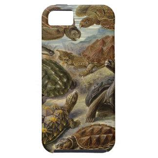 Sköldpadda och sköldpadda av Ernst Haeckel iPhone 5 Case-Mate Fodral