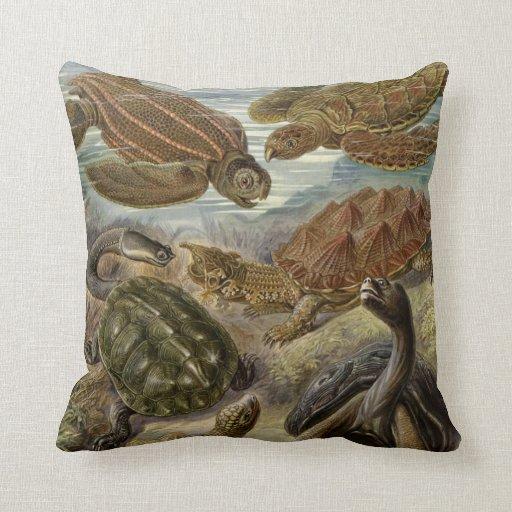 Sköldpadda och sköldpadda av Ernst Haeckel Kuddar