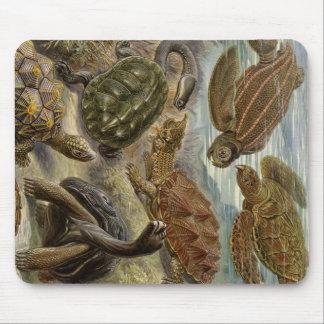 Sköldpadda och sköldpadda av Ernst Haeckel Mus Matta